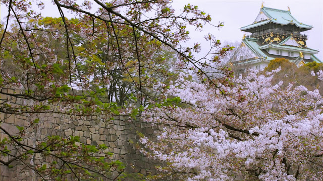 Замок Осаки на фоне цветущей сакуры