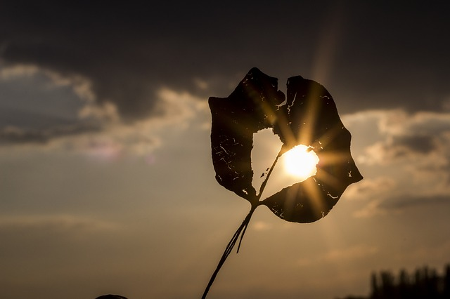 javi-lara-otoño