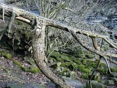 bukanklikunic.blogspot.com - Ternyata Pohon Uang Beneran Ada !!