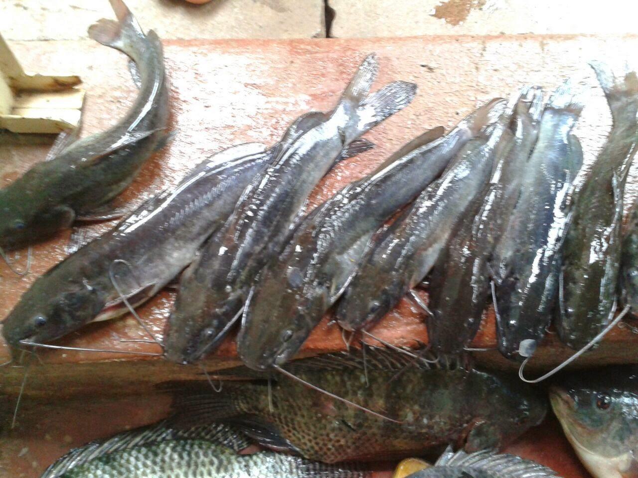 Educar - Pescar
