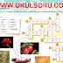 5.Sınıf Türkçe MEB Yayınları Çalışma Kitabı 146.Sayfa Cevapları