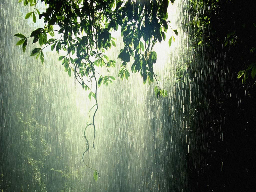 Rain Forest Tropic Beauty || Top Wallpapers Download .blogspot.com