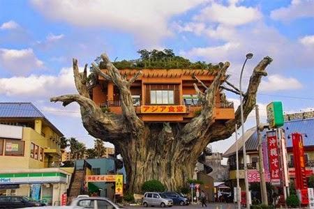 Okinawa Tree House Restaurant [lensaglobe.com]