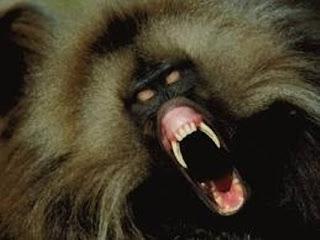 7 Hewan Terganas Di Dunia