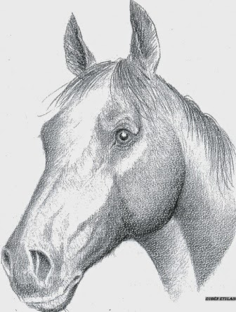 Dibujo de Rubén Etulain