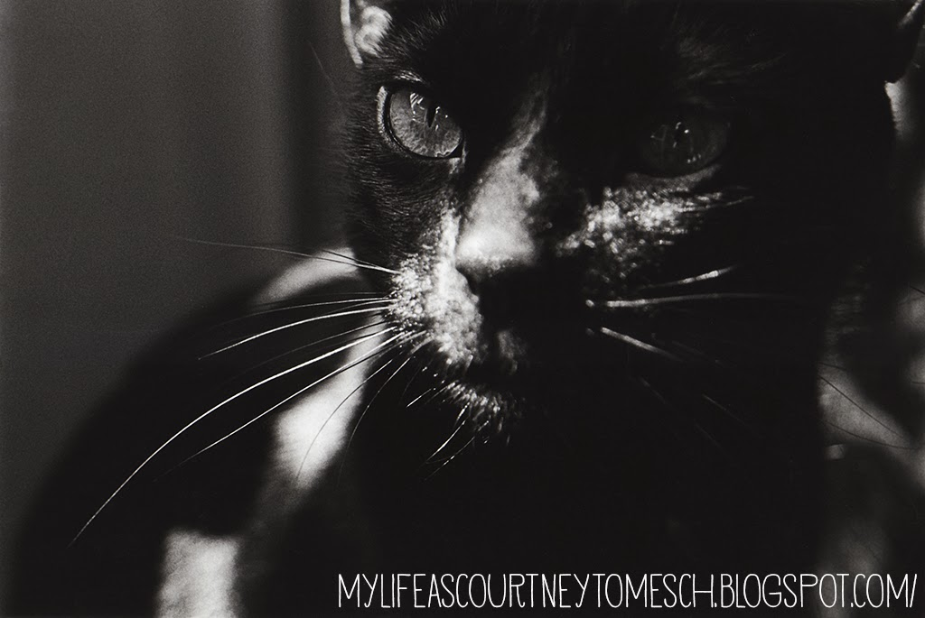 Black and White Photography Meelo Black Cat