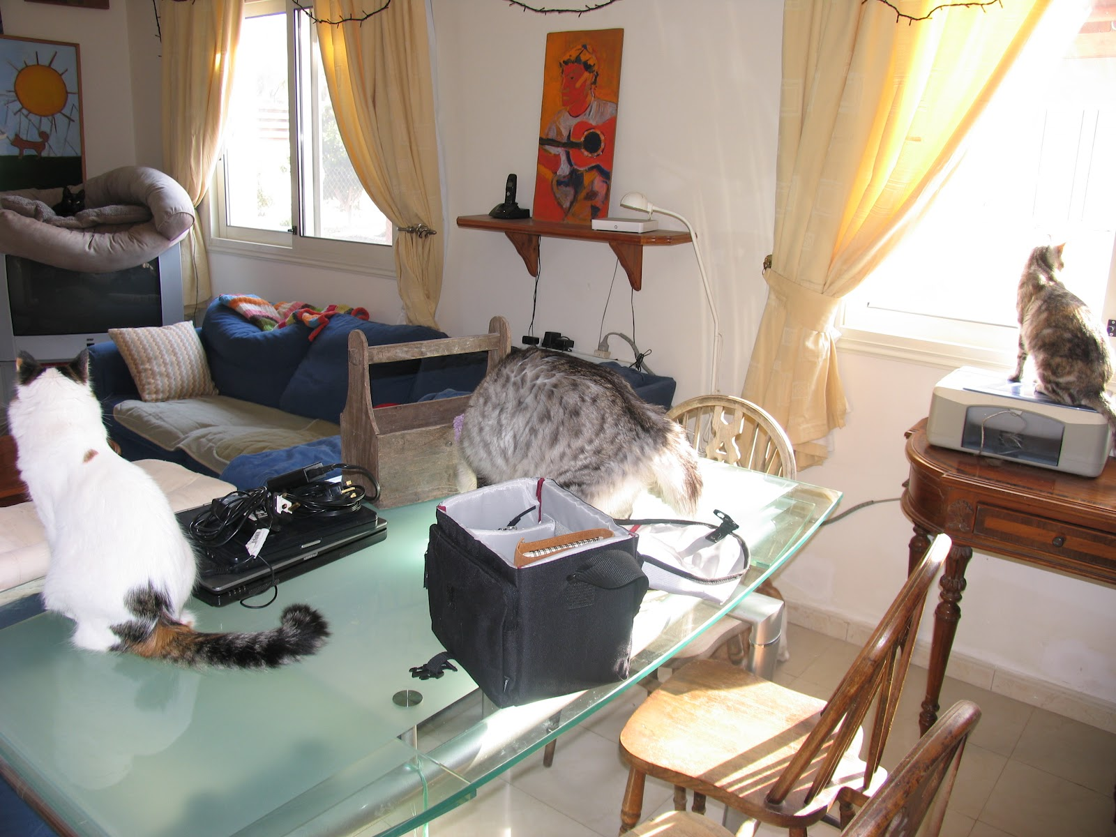 altered cats our house is a very very very fine house. Black Bedroom Furniture Sets. Home Design Ideas