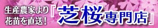 芝桜専門店 ホームページ