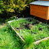 A Year In The Life Of A Raised Vegetable Bed