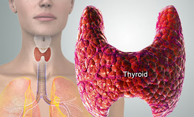 thyroid gland, hypothyroidism