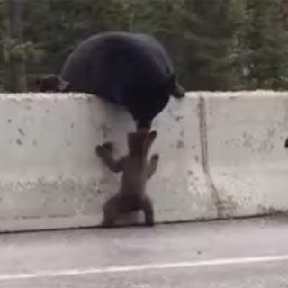 Vídeo de animais inteligentes ajudando outros animais