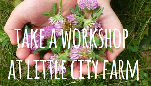 www.littlecityfarm.ca/workshops.php