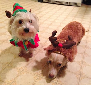 """Lexi and Junior are asking everybody, """"Where's the party?"""""""