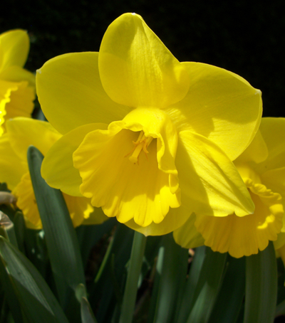 Monkton elm news events and tips blog preparing for spring for Preparing for spring