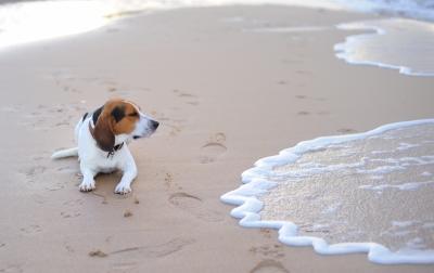 Dog: Free Digital Photos