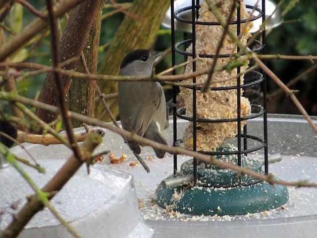 Shenstone Birder: February 2014