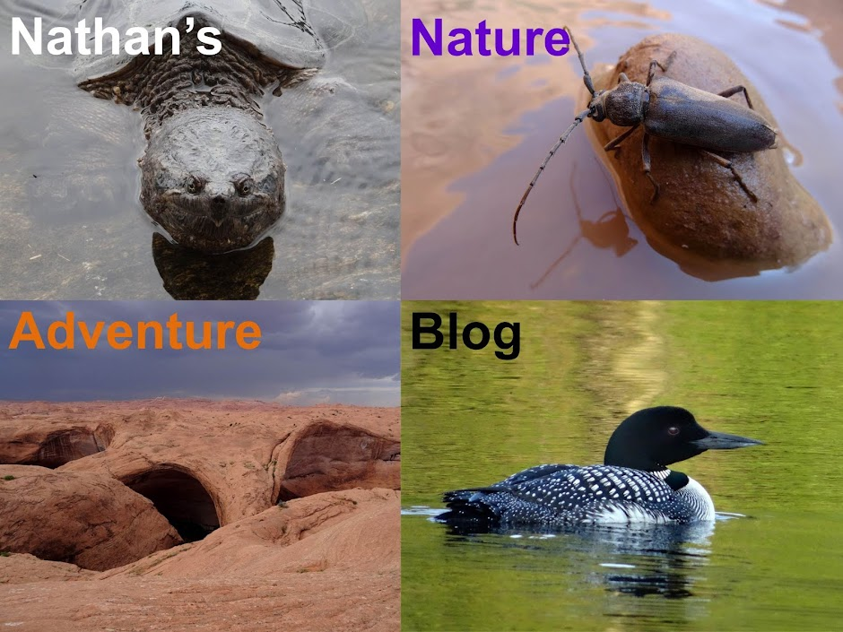 Nathan's Nature Adventure Blog