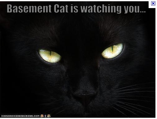 gallery for basement cat souls
