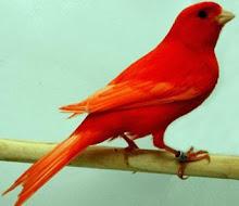 pássaros me trazem a primavera molhada de luz