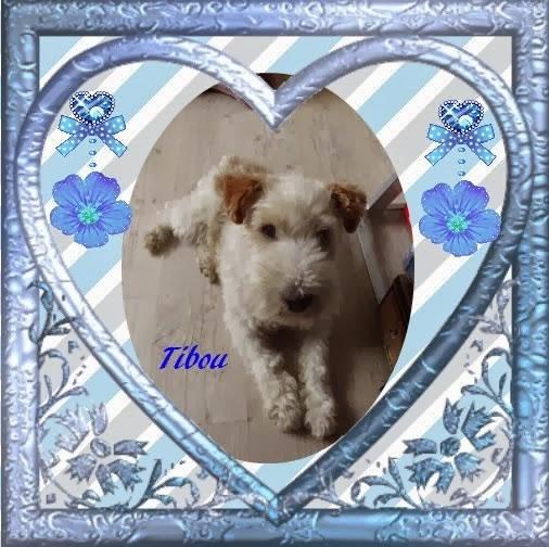 Mon nouveau petit compagnon Tibou