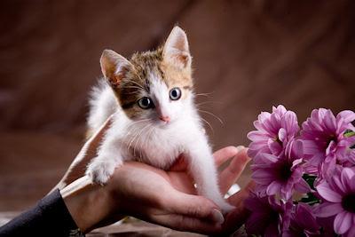 Pequeño minino - Postales de animales con flores - Mascotas muy lindas - Kittens