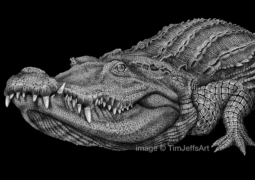 Detailed Line Drawings Of Animals : Tim jeffs art ink drawings