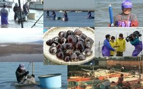 アサリ、ハマグリ 貝類事業