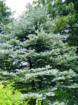 Winter shrub in Garden of Morning Calm Gapyeong