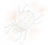 Dust mite drawing showing anatomy of a dust mite