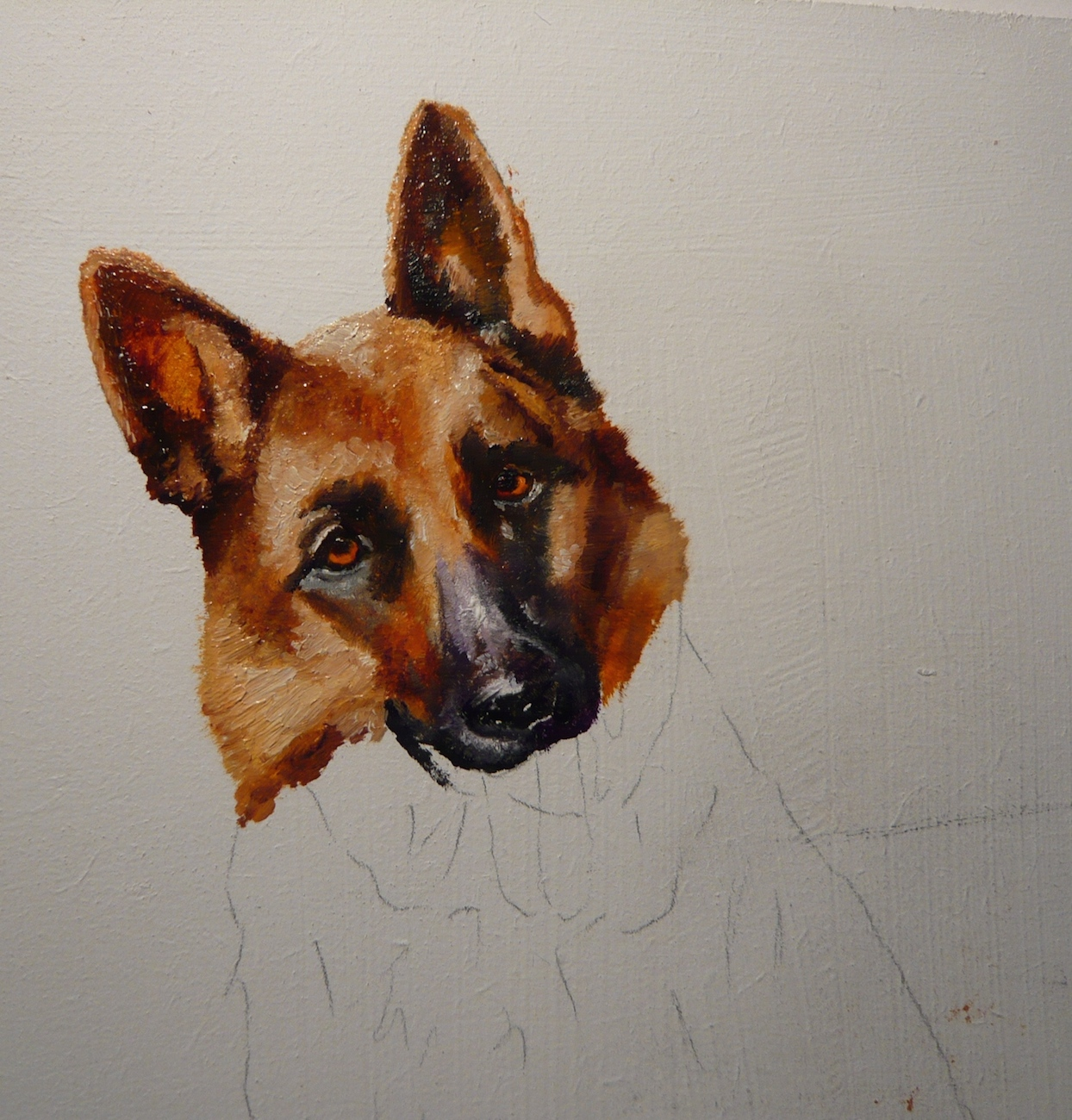 oil painting of a German Shepherd: work-in-progress stage 3. A pet painting by Karen.