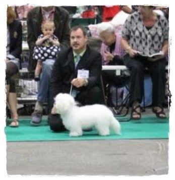 Jack on the Eurodogshow