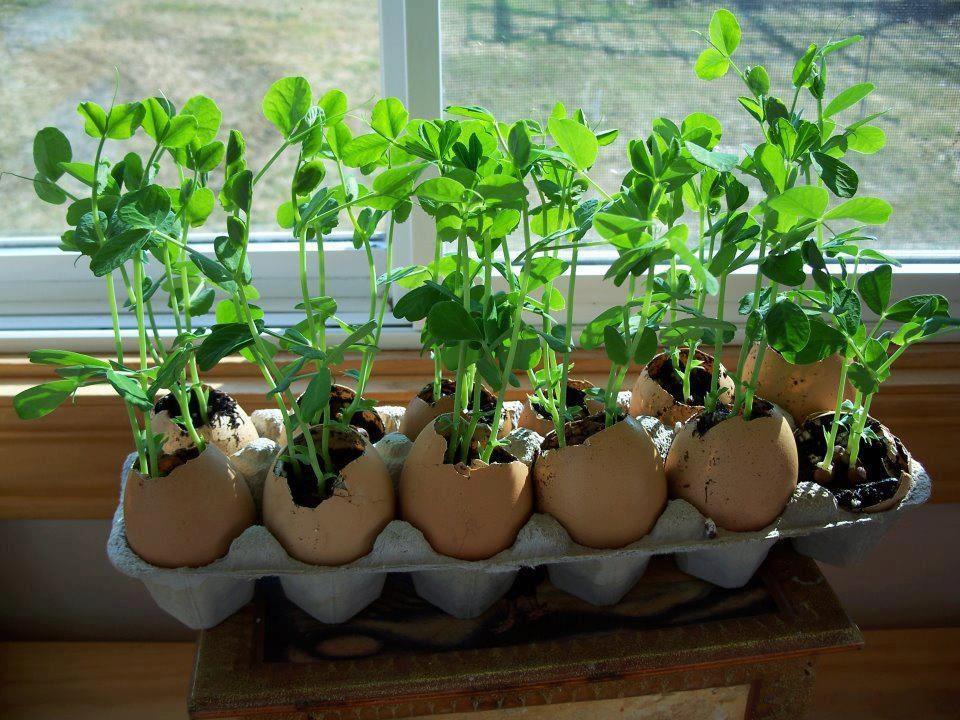 Unique Flower Pots Page 2 Gardening Forums