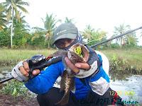 Aba Enim Pemancing Gabus