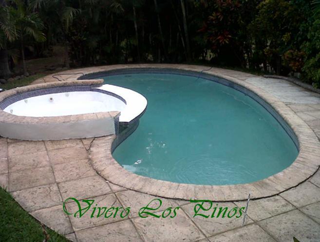 Vivero los pinos construccion de piscina con jacuzzi for Construccion de piscinas en guatemala
