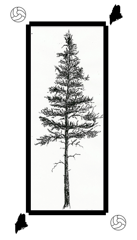 Pine-Scented Pitch