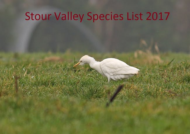 Stour Valley Sightings 2017