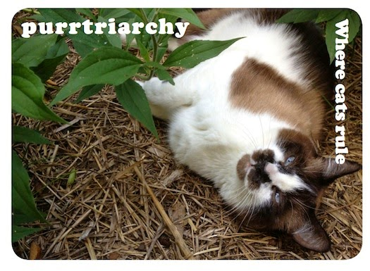 purrtriarchy