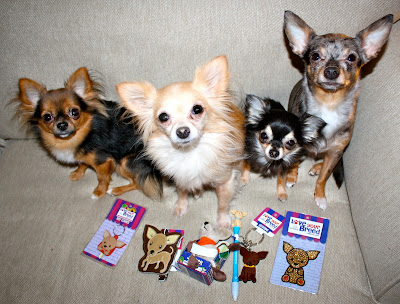 what-are-the-different-chihuahua-dog-breeds