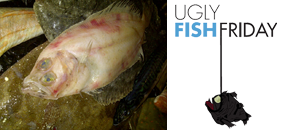 London pop ups ugly fish friday pop up in whitecross for Pops fish market