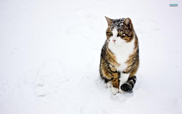 Cute Pussy Cat 32