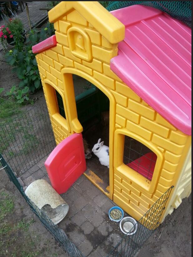 cabane d'enfant pour lapins
