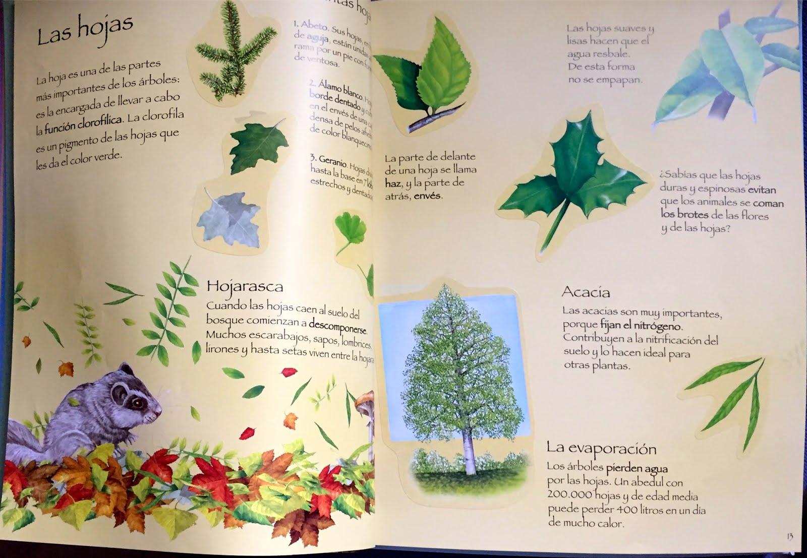 Elmer y compa a los rboles sus hojas iv for Como se llaman los arboles que no pierden sus hojas