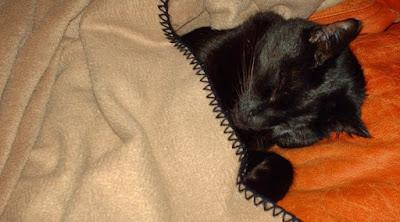 Black cat sleeping under blanket