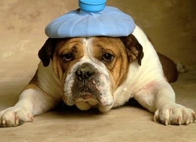toxins, pets, pet poison, pet poisoning
