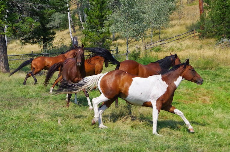 Galloping Horses- from BTBU blog
