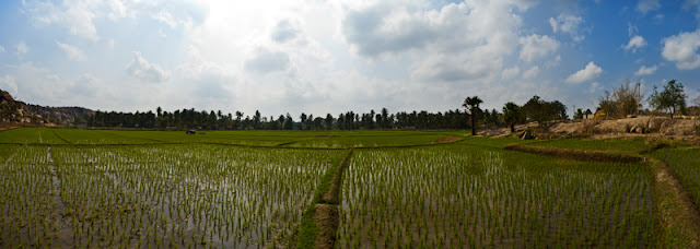 arrozales hampi