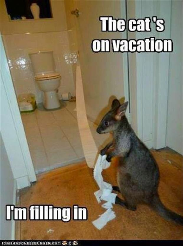 30 Funny animal captions - part 28 (30 pics), picture with caption, funny captions, funny animal