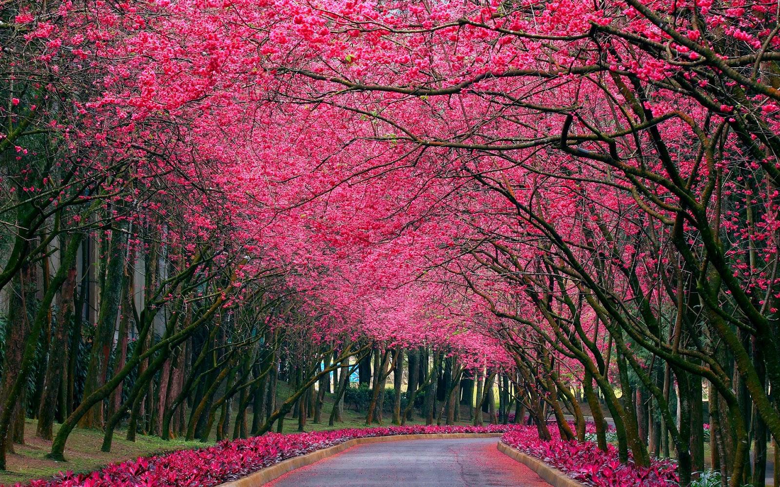 Tzpeacelove Pink Flowers Wallpaper
