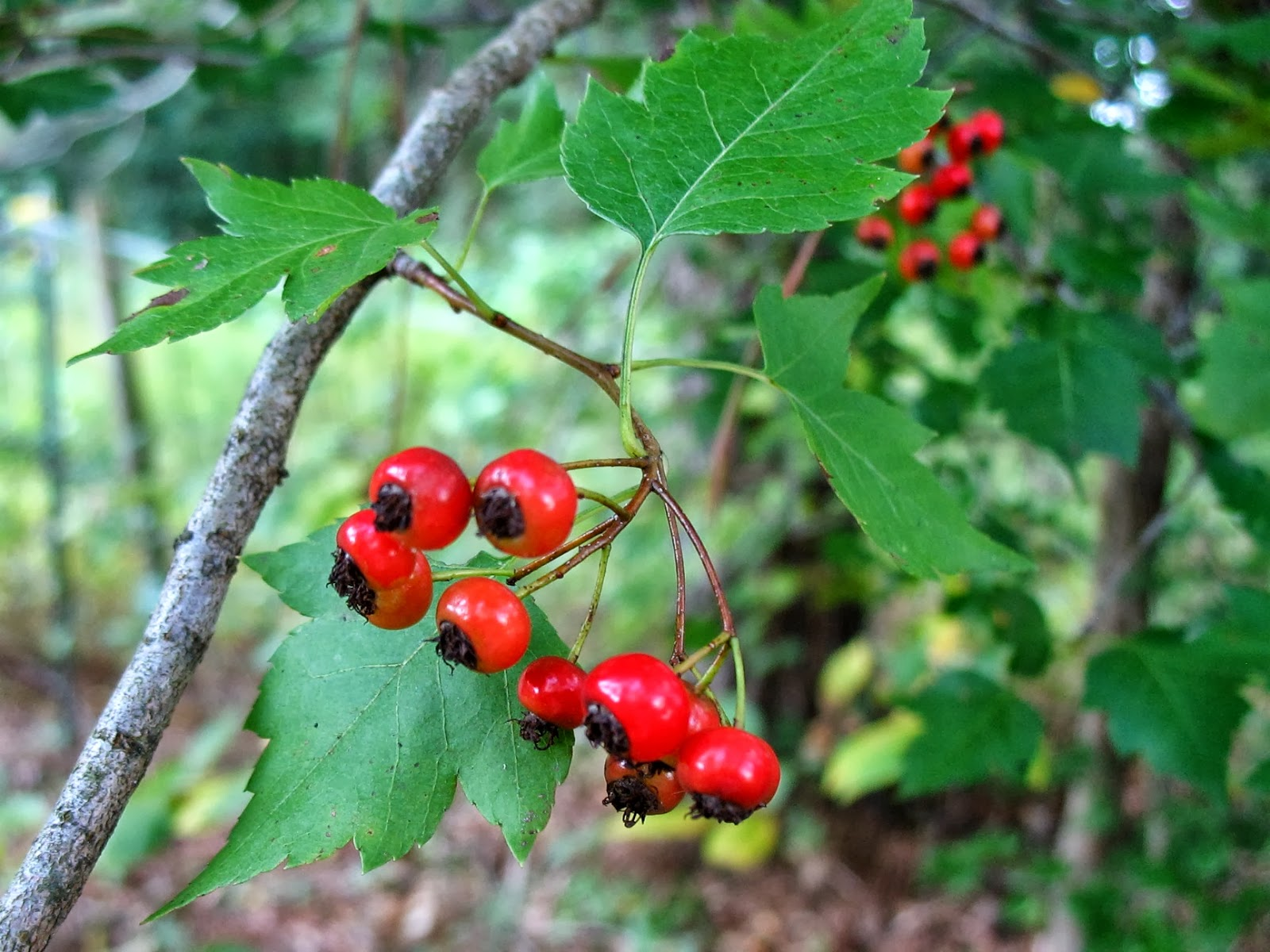 using georgia native plants september 2013