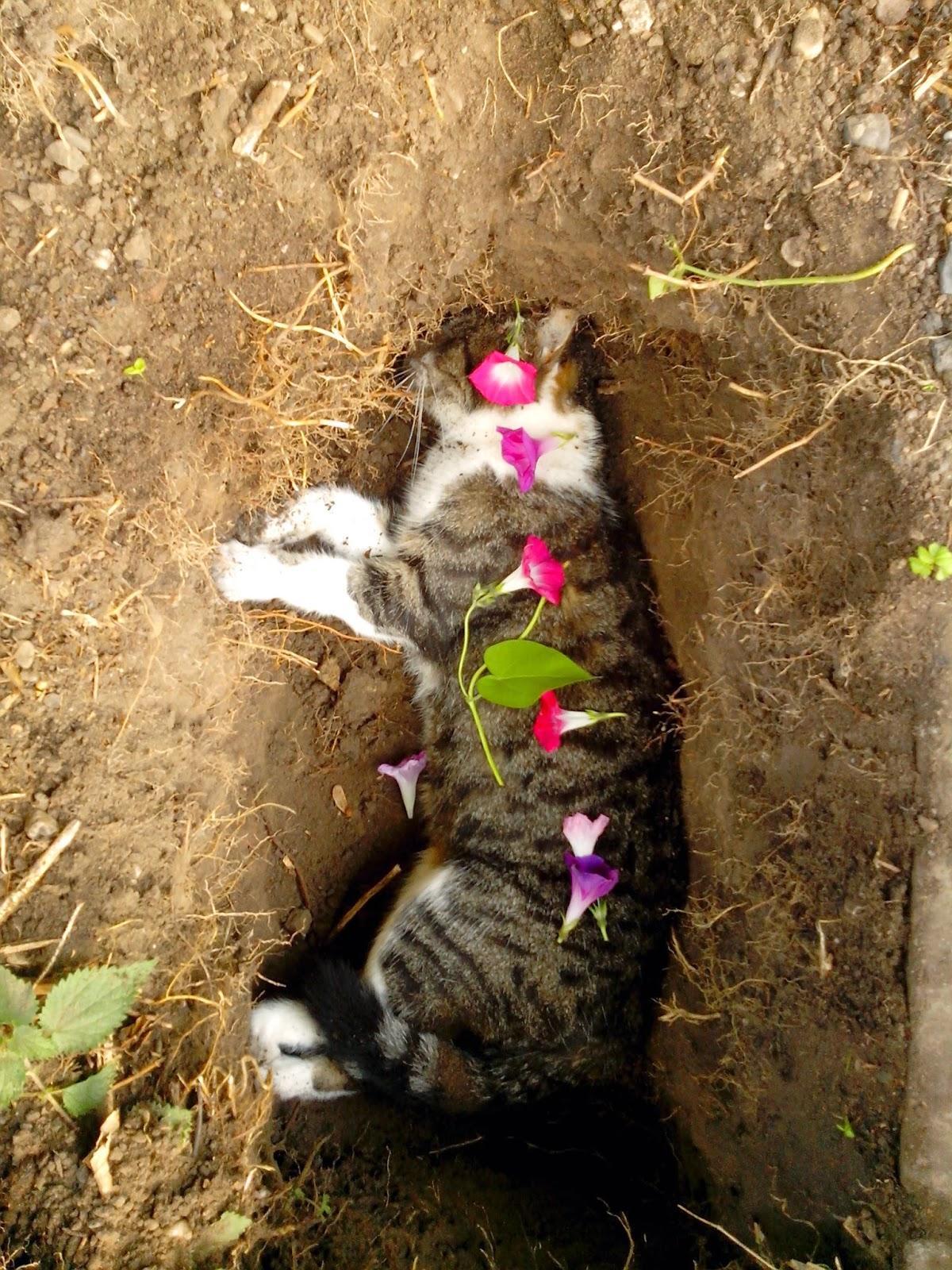 Katze Im Garten Begraben : gl cksfilz oktober 2014 ~ Lizthompson.info Haus und Dekorationen